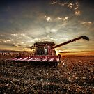 Picking Corn by Steve Baird