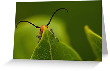 red insect playing hide and seek by Manon Boily