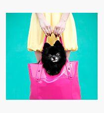 Doggie Bag Photographic Print