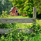 The Fence and Barn by Roxanne Persson