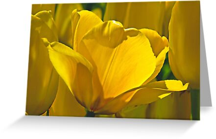 Yellow by cclaude