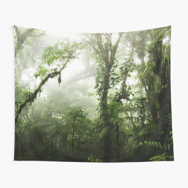 Cloud Forest Tapestry