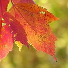 Autumn Bokeh by AngieDavies