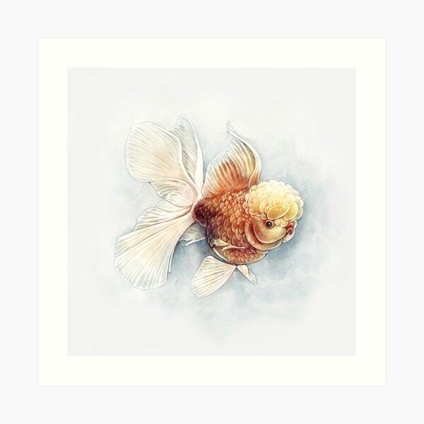Oranda Goldfish Art Print