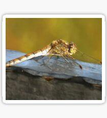 Resting Dragonfly  Sticker