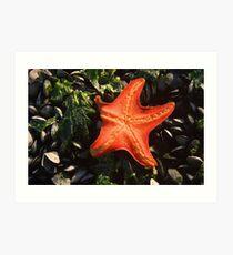 Starfish - Jinhae, South Korea Art Print