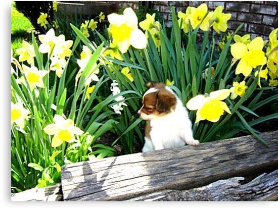 Buttery Spring by LeeAnn Kramer