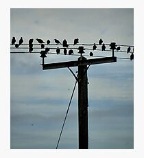 Flock of bords on a wire Photographic Print
