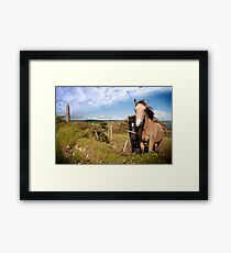 a pair of beautiful Irish horses and ancient round tower Framed Print