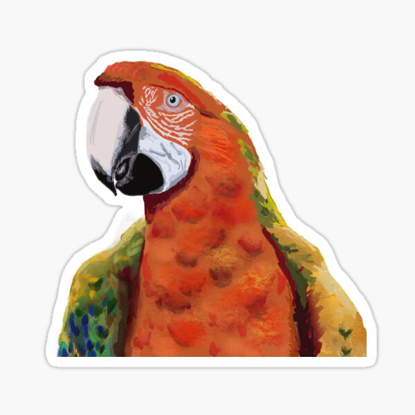 Macaw tropical parrot  Sticker