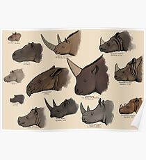 Rhinocertidae - extant rhinos and their relatives. Poster