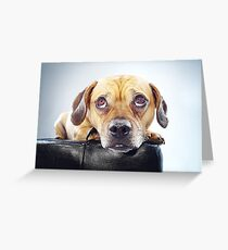 Puppy Eyed Oaks Greeting Card