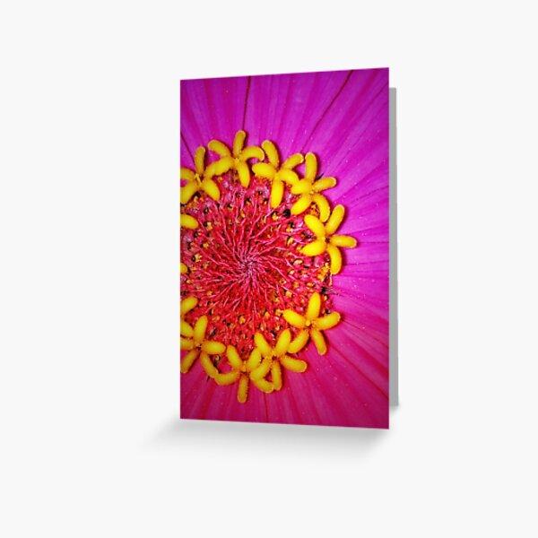 Zinnia up close & beautiful  Greeting Card