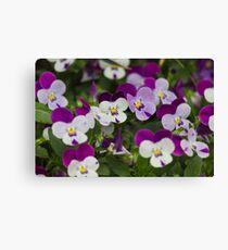 violet in the garden Canvas Print