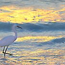 Heron in the sunset by mhm710
