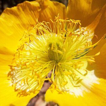 Yellow Flower by chunkymonkey