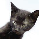 Gato Negro by dedakota