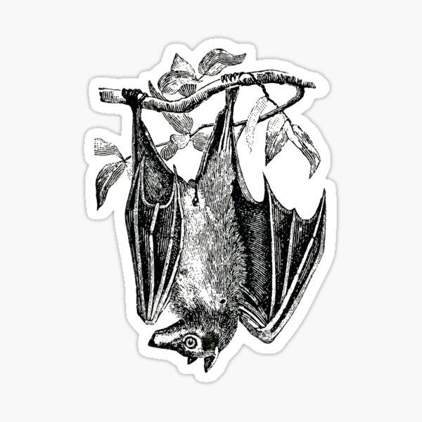 Hanging Bat Vintage Illustration, Gothic Victorian Anatomical Drawing  Sticker