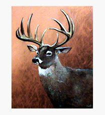Buck Photographic Print