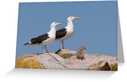 The Family Stands Proudly, Saltee Island, County Wexford, Ireland by Andrew Jones