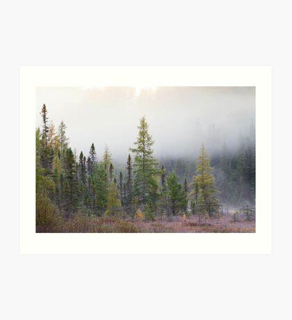 Autumn frost comes to Algonquin Park Art Print