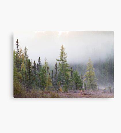Autumn frost comes to Algonquin Park Metal Print