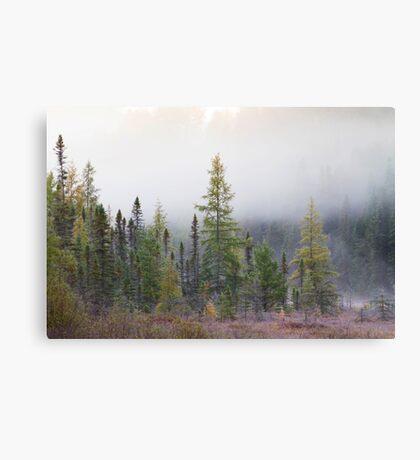 Autumn frost comes to Algonquin Park Canvas Print