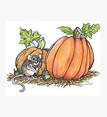 Harvest Mouse Photographic Print