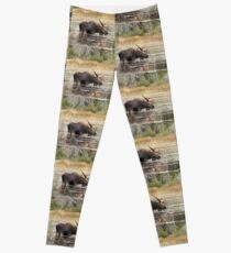 Bull Moose, Algonquin Park Leggings