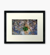 Rooted In Stone Framed Print