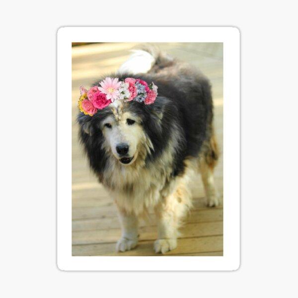 Leo from Old Friends Senior Dog Sanctuary Sticker