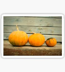 Pumpkins on a wooden background Sticker