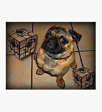 *•.¸♥♥¸.•*DON'T U BE CALLING ME SQUARE - PUG PICTURE - CARD*•.¸♥♥¸.•* Photographic Print