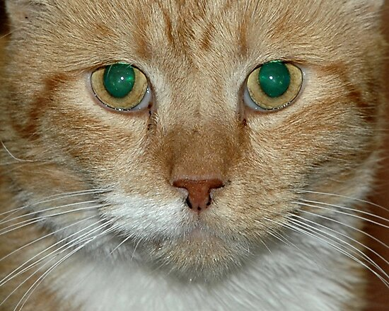 Green Eyes by Barry Doherty