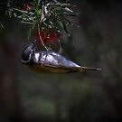 White-throated honeyeater by Janette Rodgers