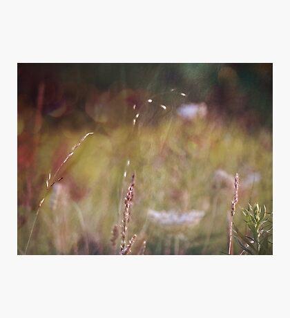 wild grasses 19 Photographic Print