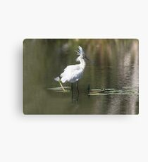 Check The Head Feathers Canvas Print