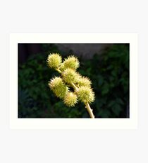 Natural green branch with spikes Art Print