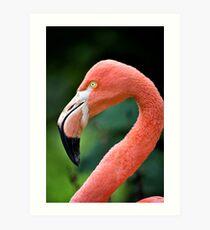 Flamingo Bird Art Print