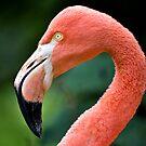 Flamingo Bird by Vicki Field