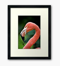 Flamingo Bird Framed Print