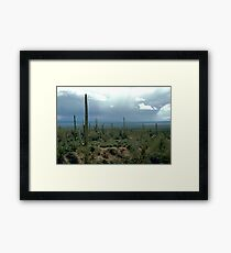 Arizona Desert and Cactuses  Framed Print