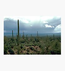 Arizona Desert and Cactuses  Photographic Print