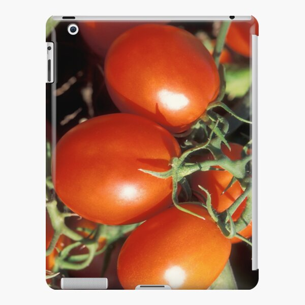 Red Tomatoes  iPad Snap Case