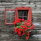 Worn out window with a flair. by Lee d'Entremont