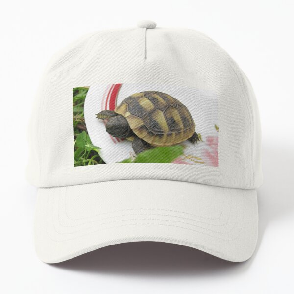 Baby Eastern Hermann's Tortoise at Home Dad Hat
