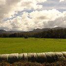Greener Pastures by Mindseyephoto