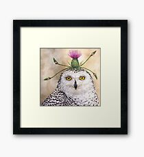 Cleveland, the snowy owl with thistle Framed Print