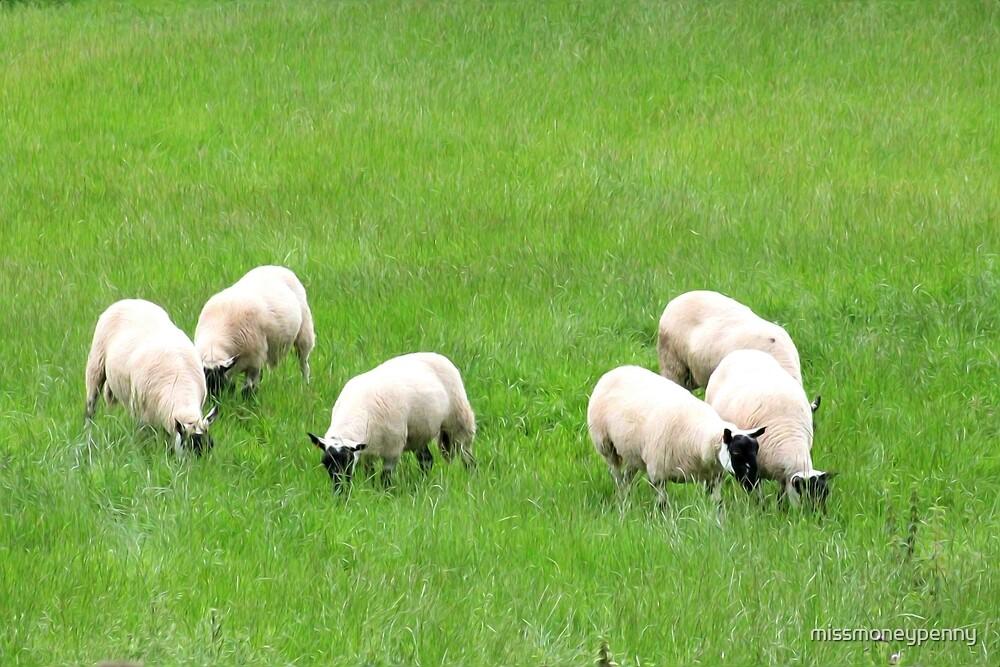 Grazing Sheep by missmoneypenny