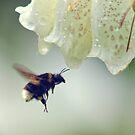 Flying Bee by Vicki Field